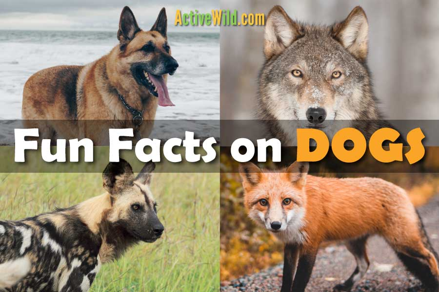 Fun Facts On Dogs