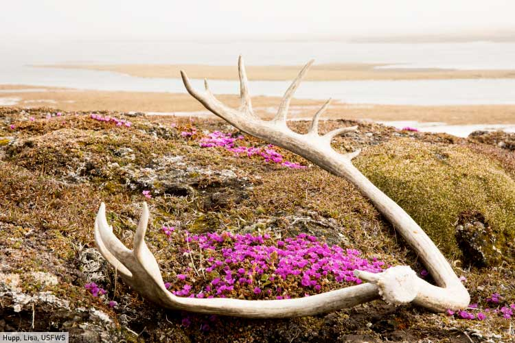 Tundra Scene