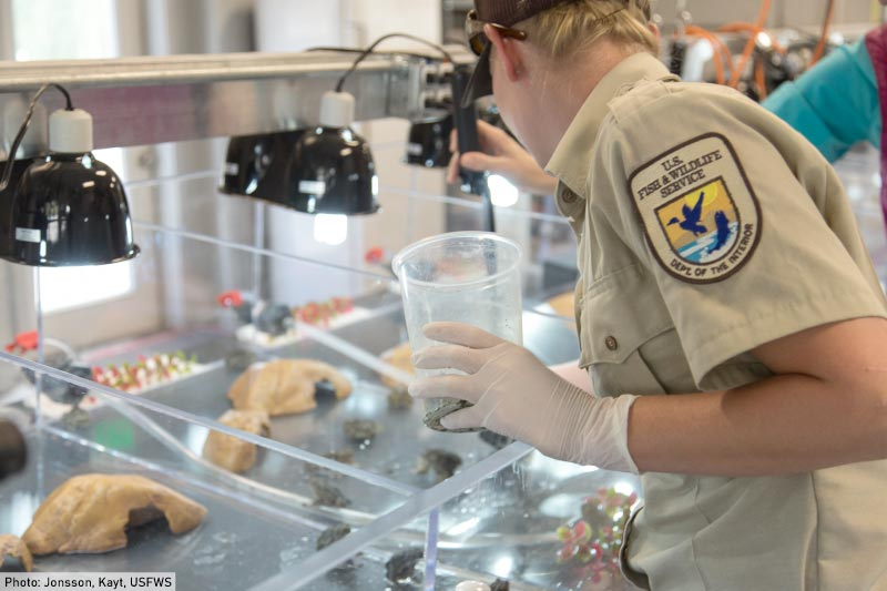 A marine biologist in the lab