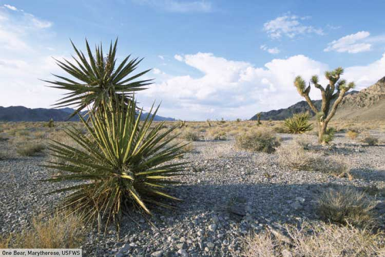 Mojave Desert North America