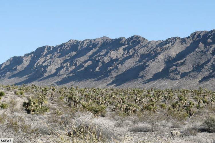 North American Desert Landscape