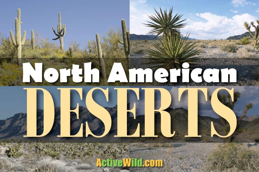 North American Deserts