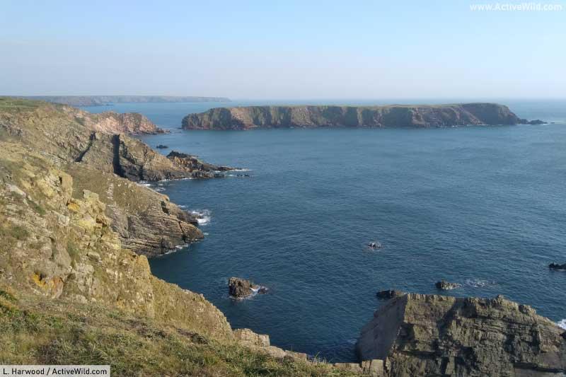 Sea Cliff Habitat