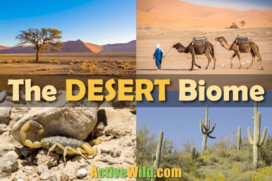 The Desert Biome Facts