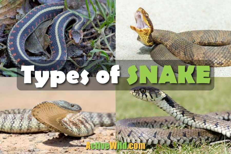 Types of Snakes