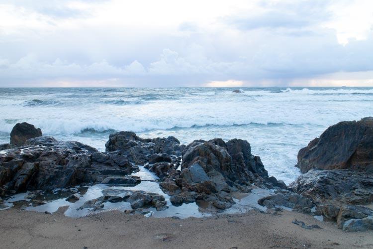 tidepools marine habitat