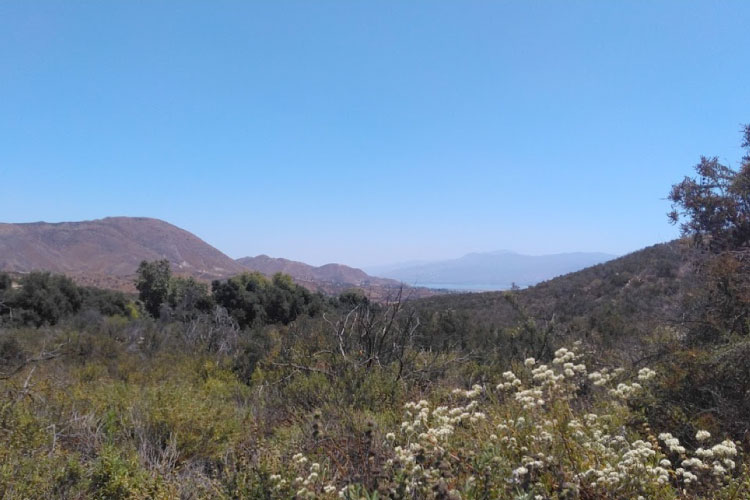 Chaparral in California