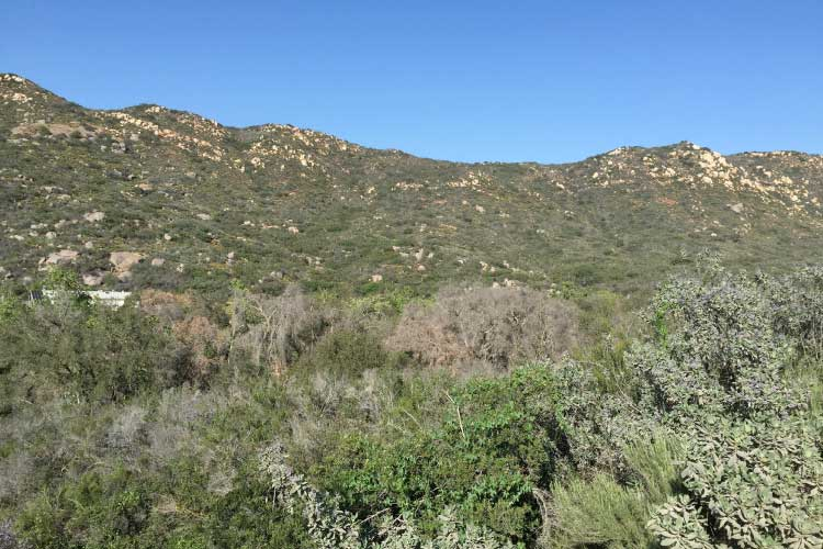 Chaparral and sage scrub