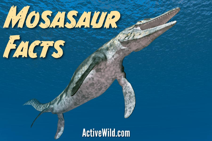 Mosasaur Facts