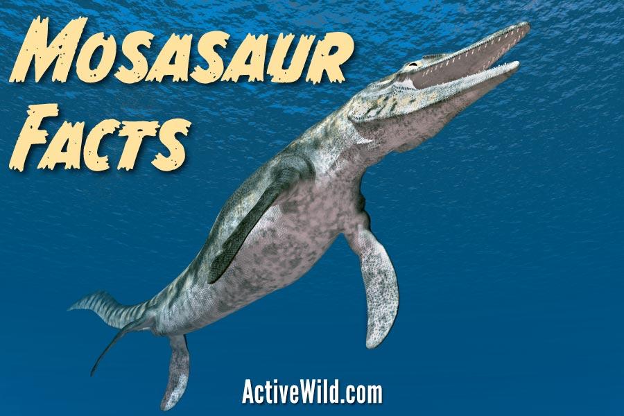 Mosasaur Facts