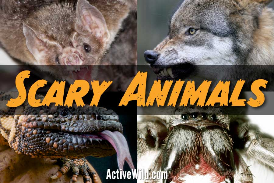 scary animals list