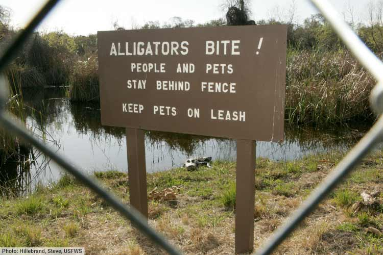 Alligator attacks warning sign