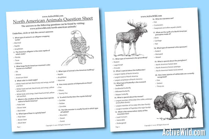 North American Animals Printable Worksheet