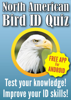 North American Bird Quiz Ad