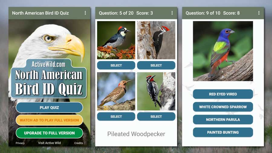 North American Bird ID Quiz App Android Screenshots