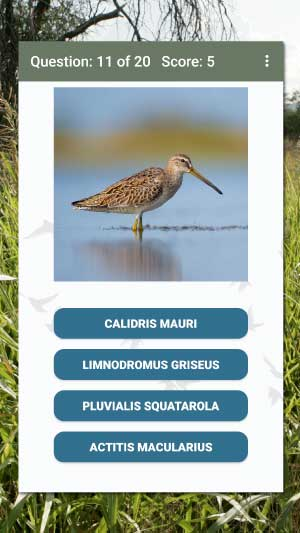 Scientific bird name quiz