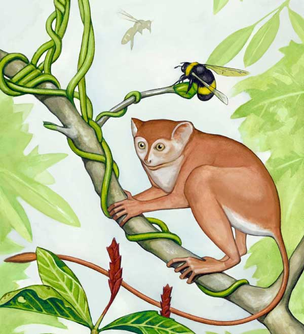 Early primate Archicebus achilles