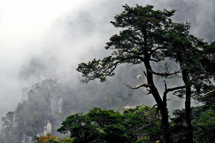 Temperate rainforest in South America