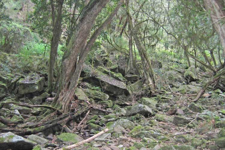 Temperate rainforest in Australia