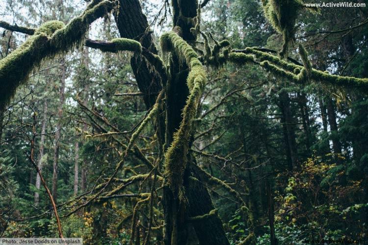 Temperate rainforest understory