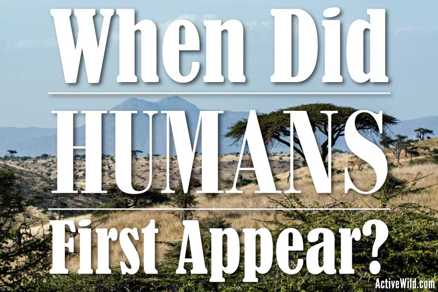 when did humans first appear