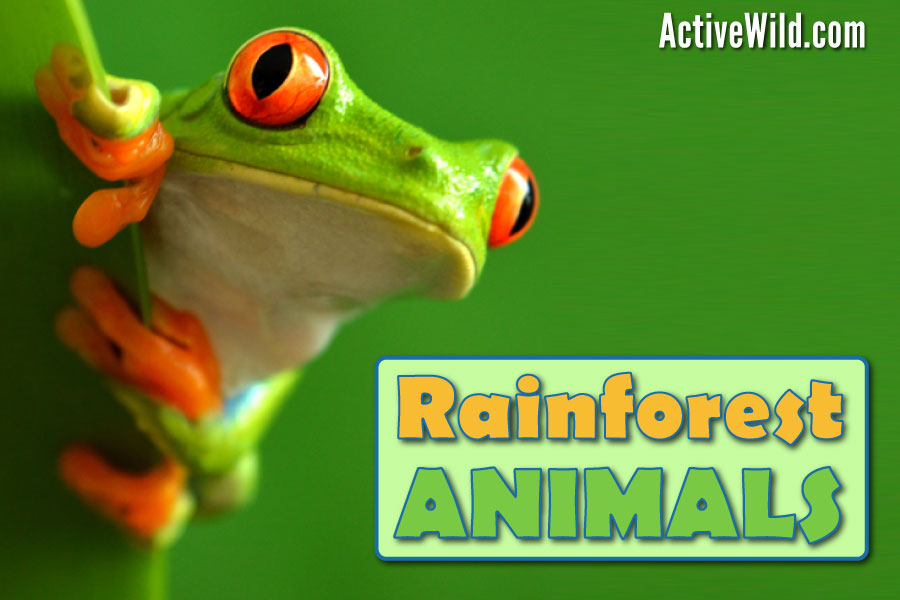 Rainforest Animals List