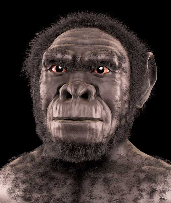 Homo habilis early human