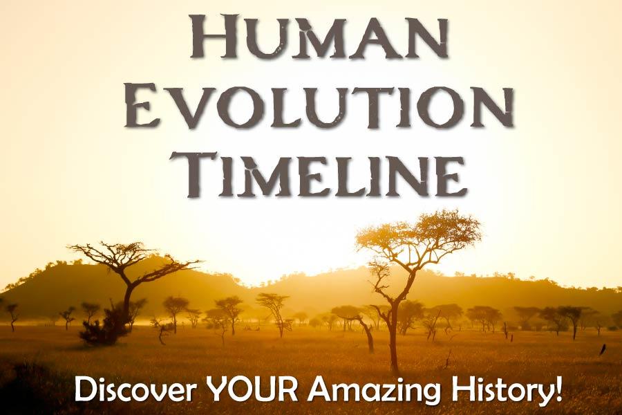 Human Evolution Timeline Chart 1