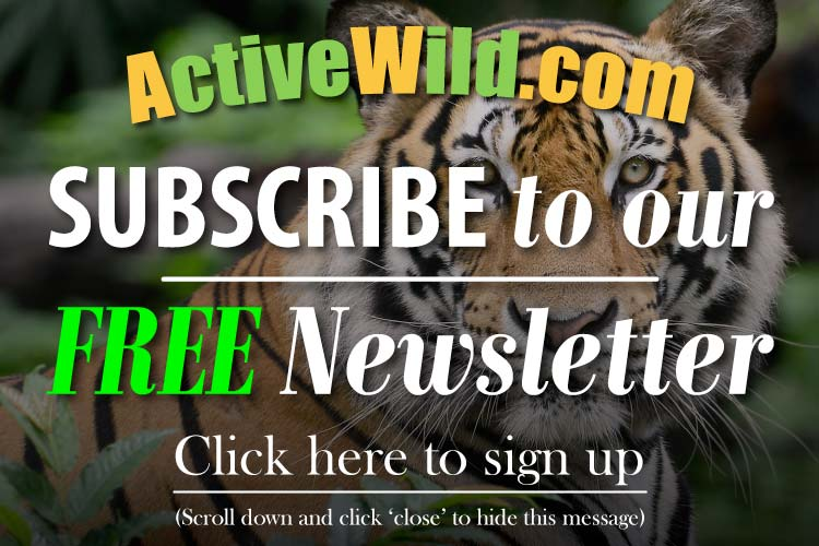 Active Wild Newsletter Subscription Sign Up Message
