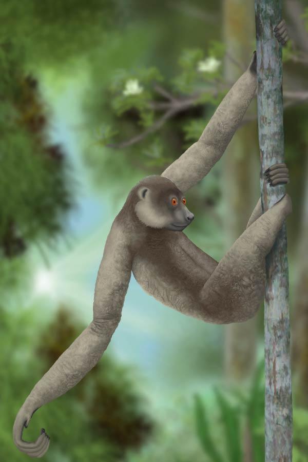 Large sloth lemur extinct mammal of Madagascar