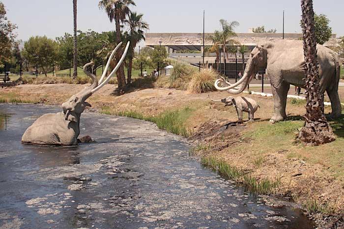 Mammoths In La Brea Tar Pit