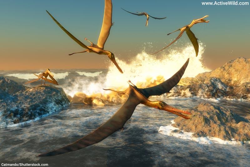 Pterosaur Anhanguera