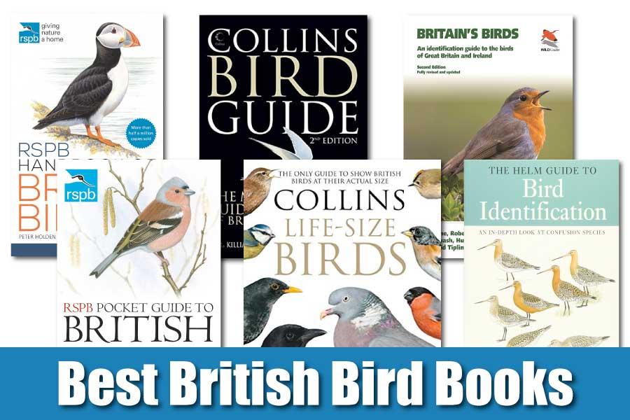 Best British Bird Books