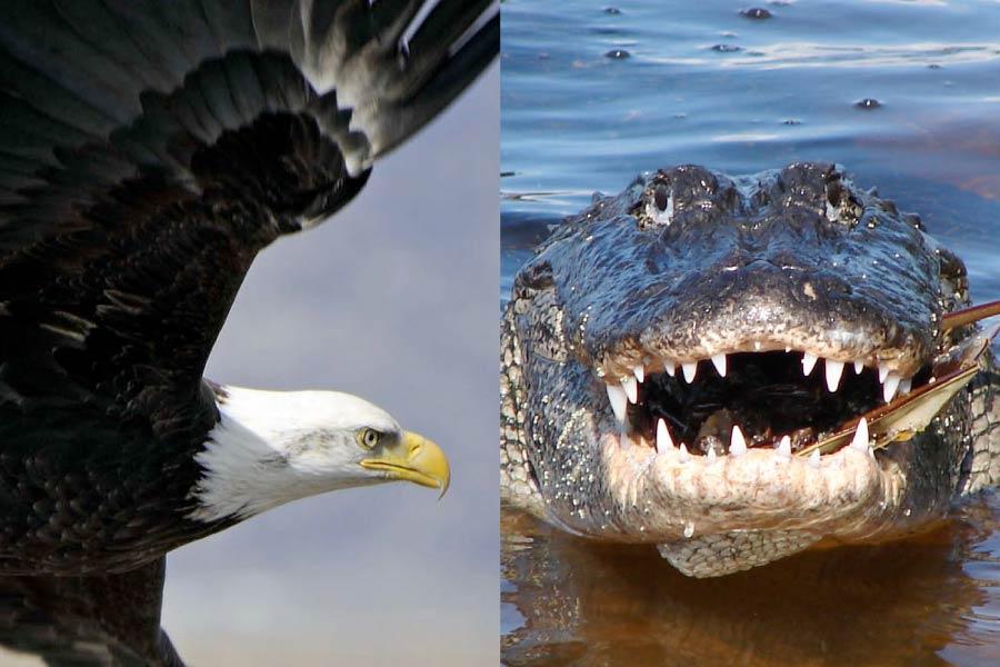 Bird Reptile