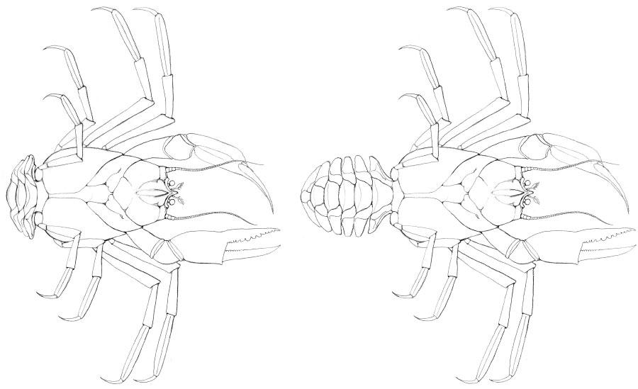 Eocarcinus prehistoric crab