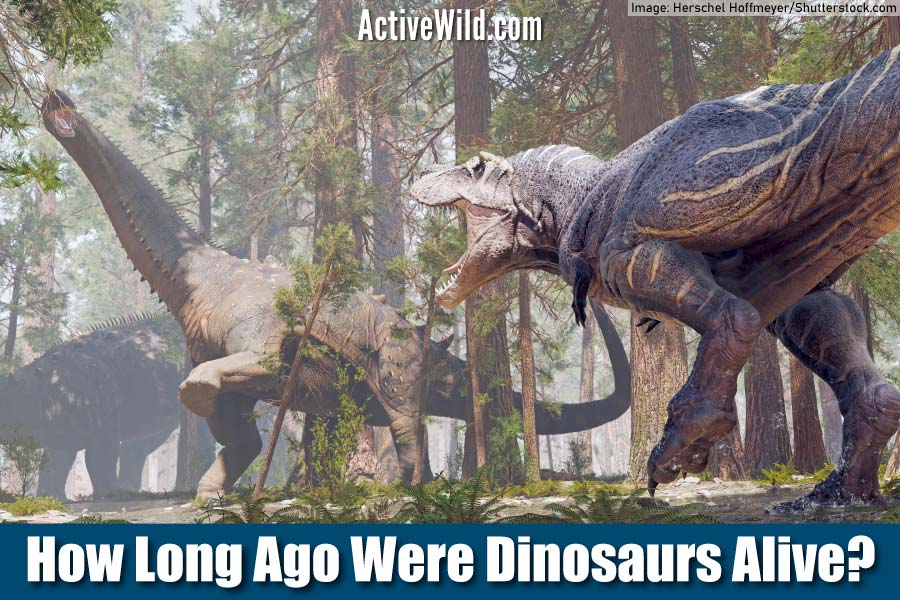 How Long Ago Were Dinosaurs Alive