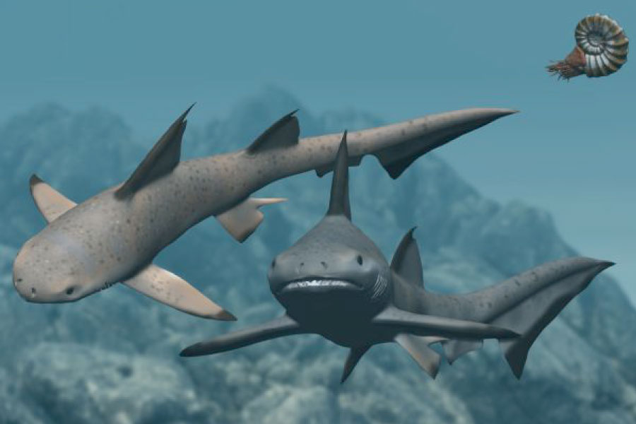 Hybodus Mesozoic Shark