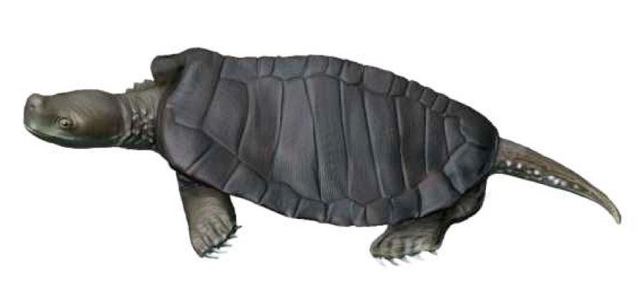 Kayentachelys Mesozoic Turtle