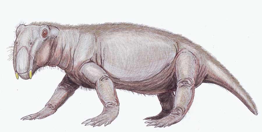 Lystrosaurus Mesozoic Animal