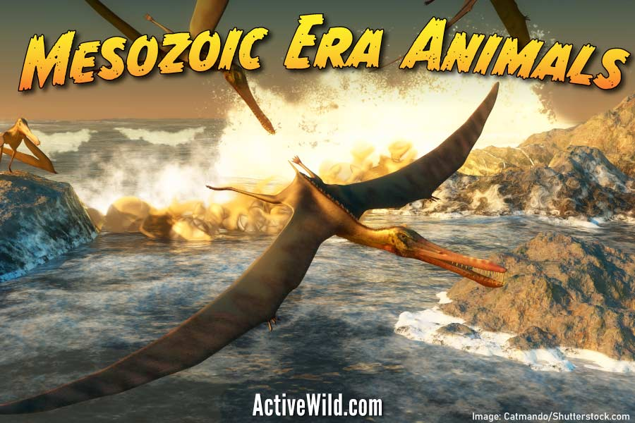 Mesozoic Era Animals List