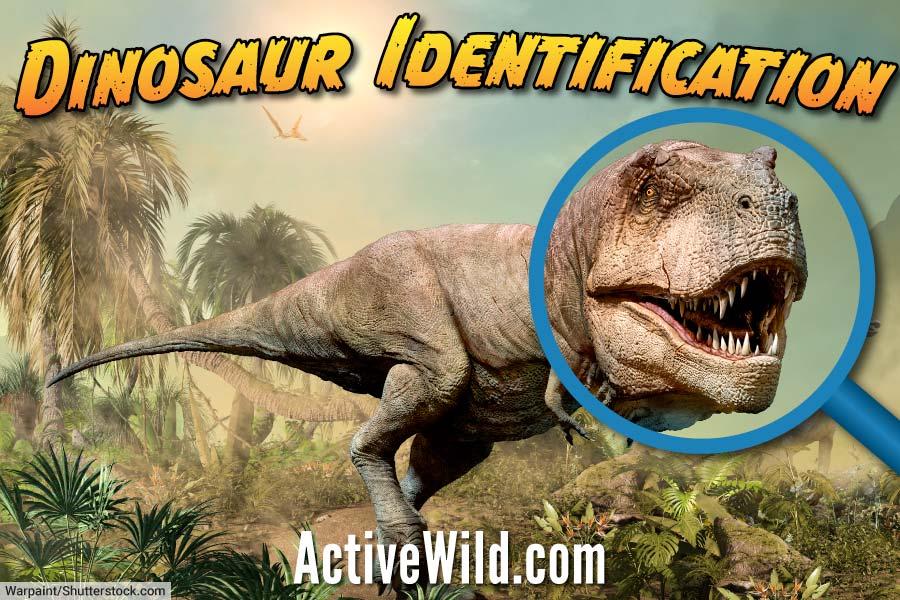 Dinosaur Identification