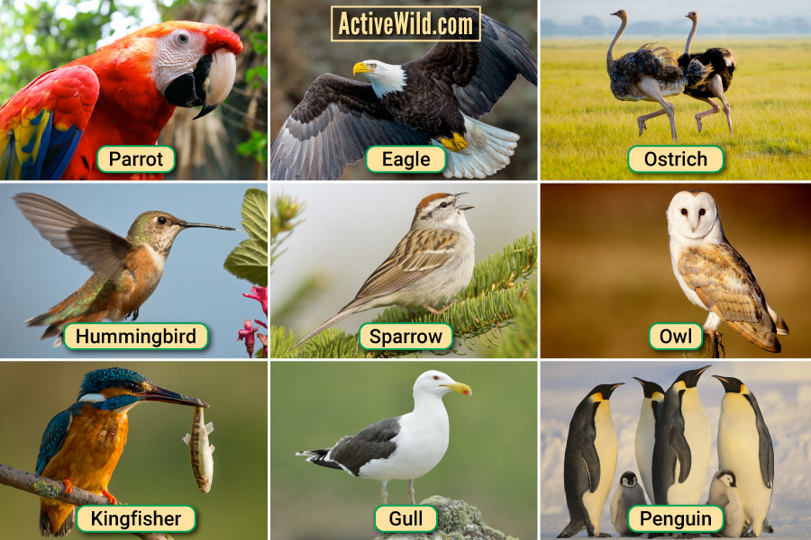 Types Of Birds Pictures