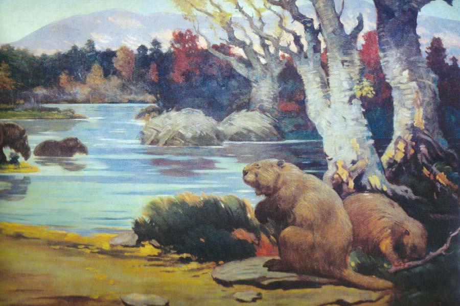 Castoroides - Giant Beaver