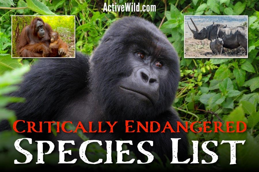 Critically Endangered Species List