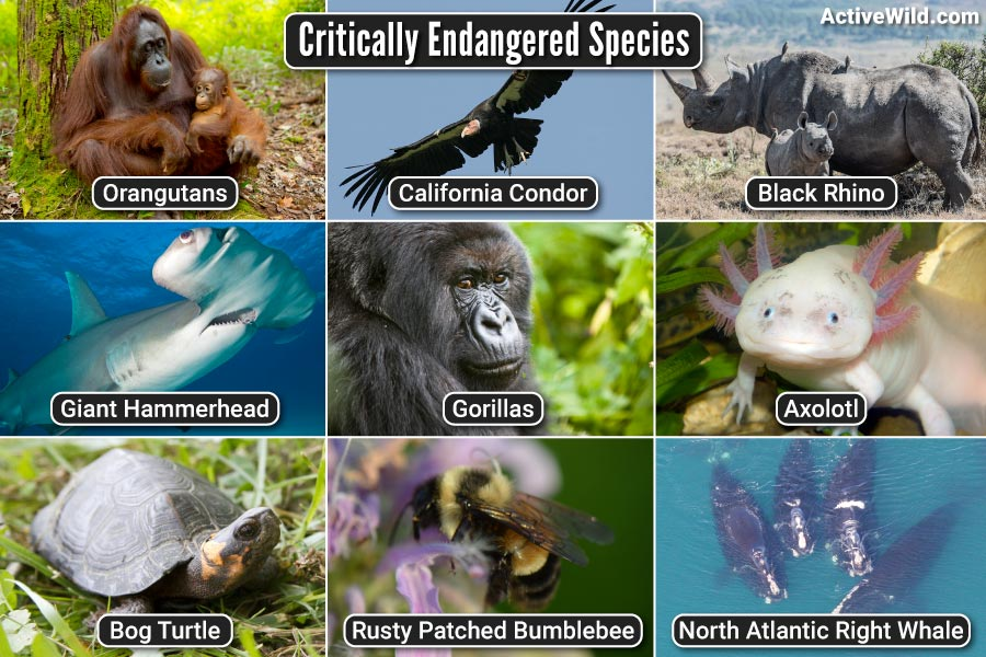 Critically Endangered Species Pictures