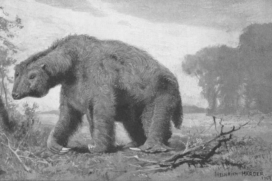 Megatherium ground sloth