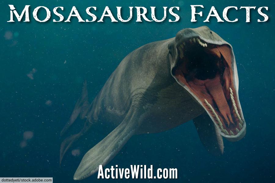 Mosasaurus Facts