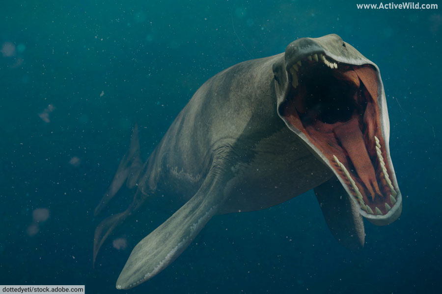 Mosasaurus With Open Mouth
