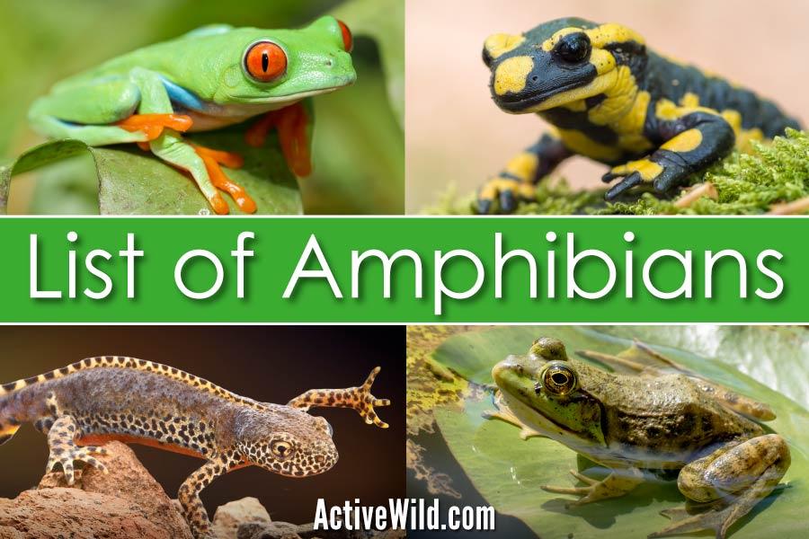 List Of Amphibians