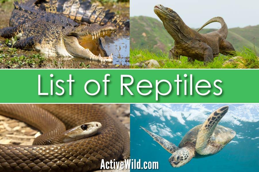 List Of Reptiles